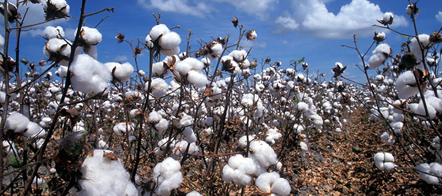 the southern cotton ginners association
